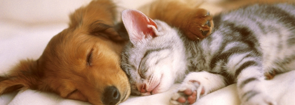 A dog and a cat lay on a bed sleeping together.